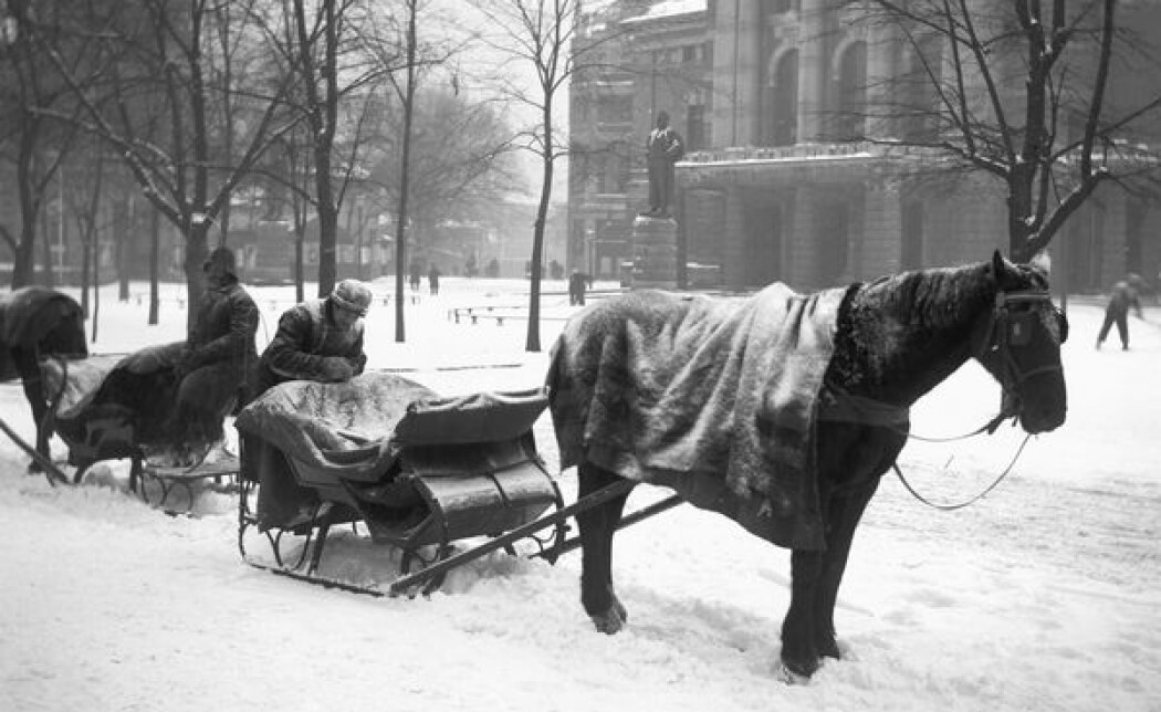 Slededrosjer står klare ved Nationaltheatret en vinterdag i 1904. Her har hestene fått et teppe over ryggen som beskyttelse mot kulde og snø. Dyrebeskyttelsen jobbet for bedre hverdagen for arbeidshestene. (Bilde: Anders Beer Wilse/ Oslo Museum)
