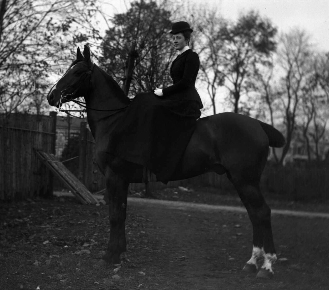 Hesten har fått kuttet av en del av halen sin i tråd med moten. Dyrebeskyttelsen arbeidet for å få slutt på praksisen. (Foto: Gustav Borgen)