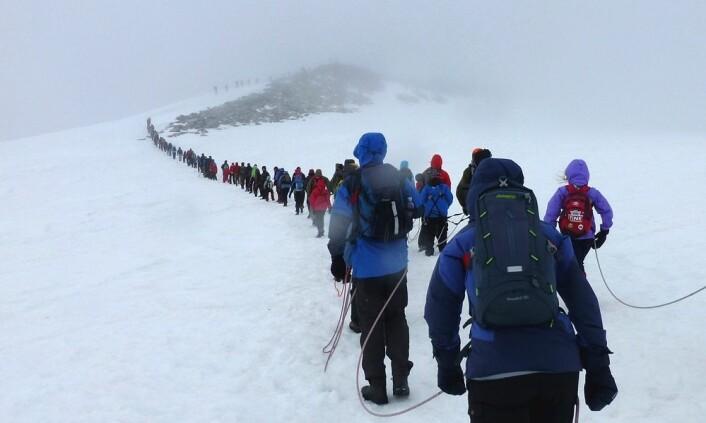 Inntil tusen mennesker kan i løpet av en sommerdag tråkke rundt oppe på toppen av Galdhøpiggen. Utrolig nok har Altissima greid å klore seg fast. (Foto: Paul Kleiven, NTB Scanpix)