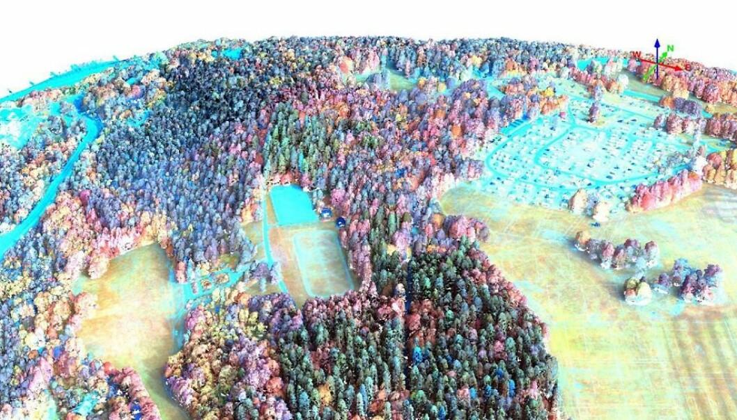 I et hyperspektralt bilde kommer forskjellene mellom de ulike tresortene i Ekebergparken i Oslo tydelig frem. Her er hyperspektrale data koblet med 3D-info fra laserdata, slik at man også ser høyden på trærne. (Illustrasjon: Terratec AS)