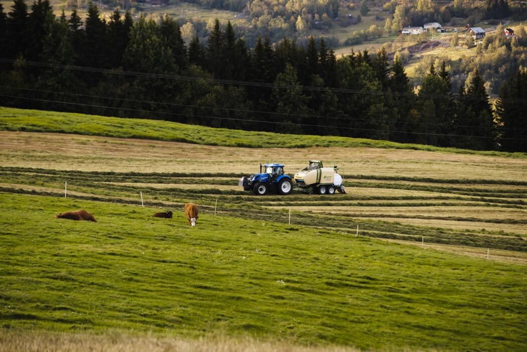 Nesten halve jordbruksarealet i Norge var i 2018 leiejord, viser tall fra SSB. (Foto: Stian Lysberg Solum, NTB scanpix)