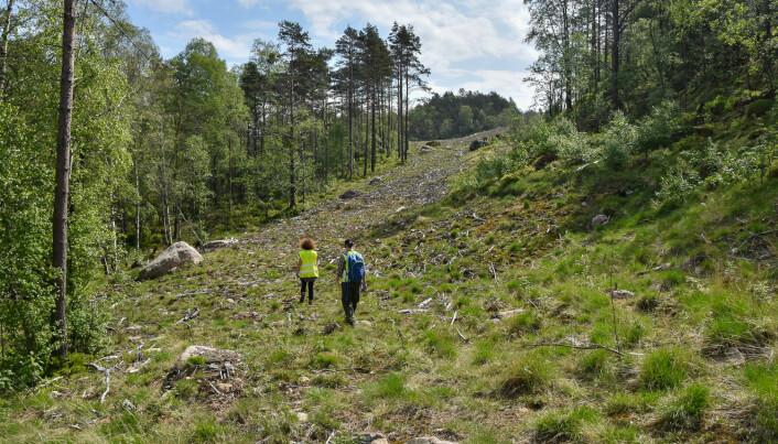 Her gikk det før en anleggsvei bort til et massedeponi. Utbyggeren tok godt vare på toppjord og vegetasjon og la det på igjen da anlegget var avsluttet. Når gror det godt med lokale arter. Foto: Dagmar Hagen / NINA.