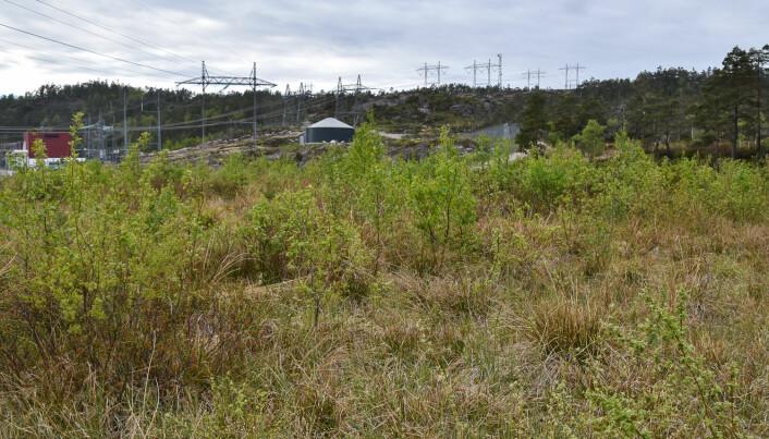 Dersom det legges til rette for det vil lokale busker, gras, urter og trær etablere seg. Tilsåing eller planting kan ofte være helt overflødig. Foto: Dagmar Hagen / NINA.