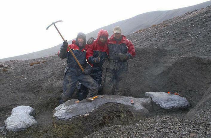 Utgravingen av Mikkel ved Janusfjellet på Svalbard. (Foto: Spitsbergen Jurassic Research Group)