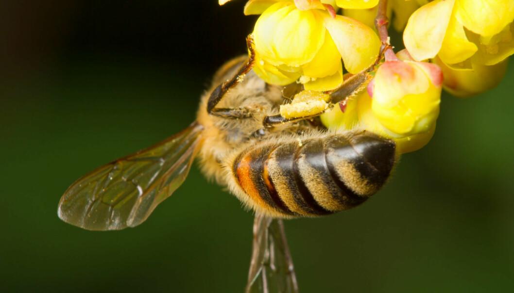 Gift bier inneholder spesielle stoffer som kan binde seg til kreftceller.  (Foto: Microstock)