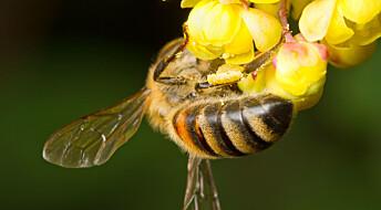 Vil bekjempe kreft med gift fra bier