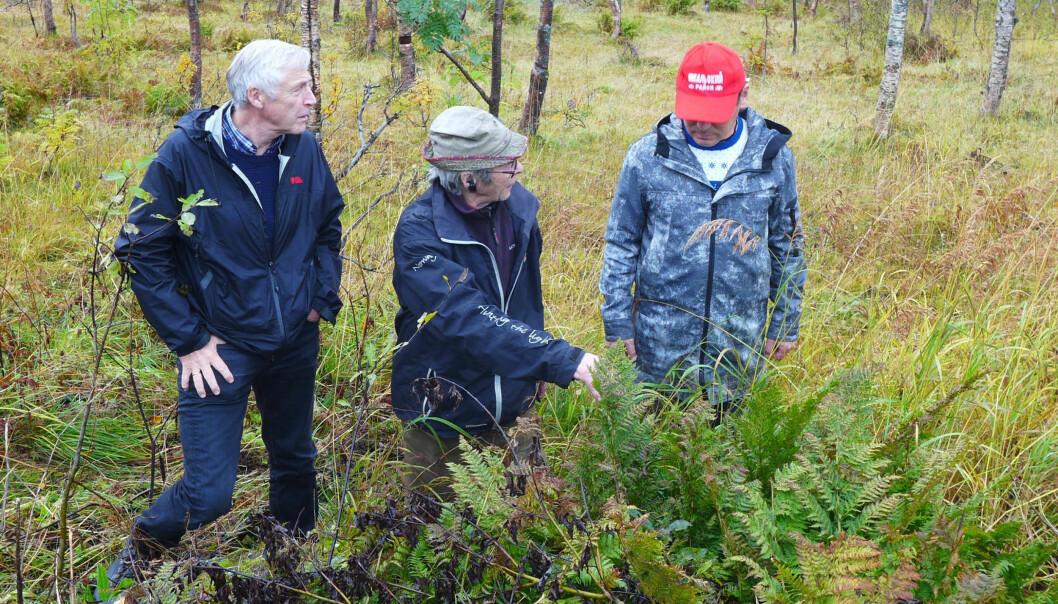 Forskerne med den samiske reindriftsutøveren Per Kitti. Han viste dem blant annet planter som vokser annerledes på grunn av klimaendringer. (Foto: Zoia Vylka Ravna / NIKU)