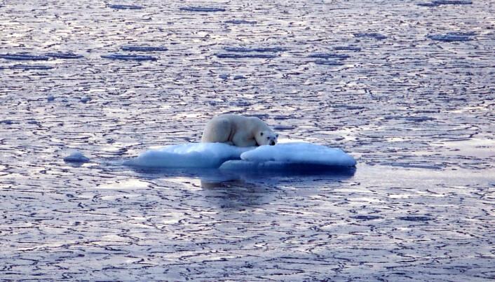 «(Is)bjørnen sover» (Foto: Valérie Bellec, NGU)