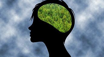 Urskogen i hodet