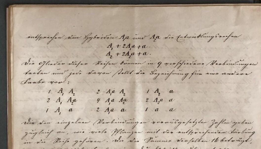 De fleste som har lært litt biologi på skolen, drar kjensel på den notasjonen Mendel brukte i manuskriptet for over 150 år siden: Store bokstaver markerer dominante gener, mens små bokstaver markerer recessive, eller vikende, gener. (Foto: Ellen Repiková, Společně.org).