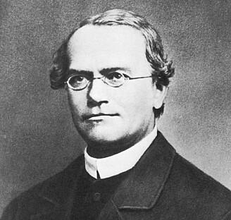 Gregor Mendel (1822-1884) grunnla den moderne genetikken. (Ukjent fotograf / Wikimedia Commons).
