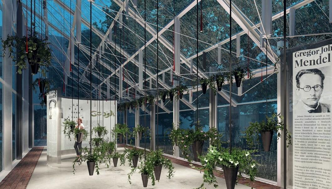 Mendels opprinnelige drivhus ble ødelagt i en storm. Nå planlegger Mendel-museet å reise et moderne drivhus på den samme tomten, til minne om Mendel. (Tegning avv Kristof Architects & Urban Designers, Tsjekkia).
