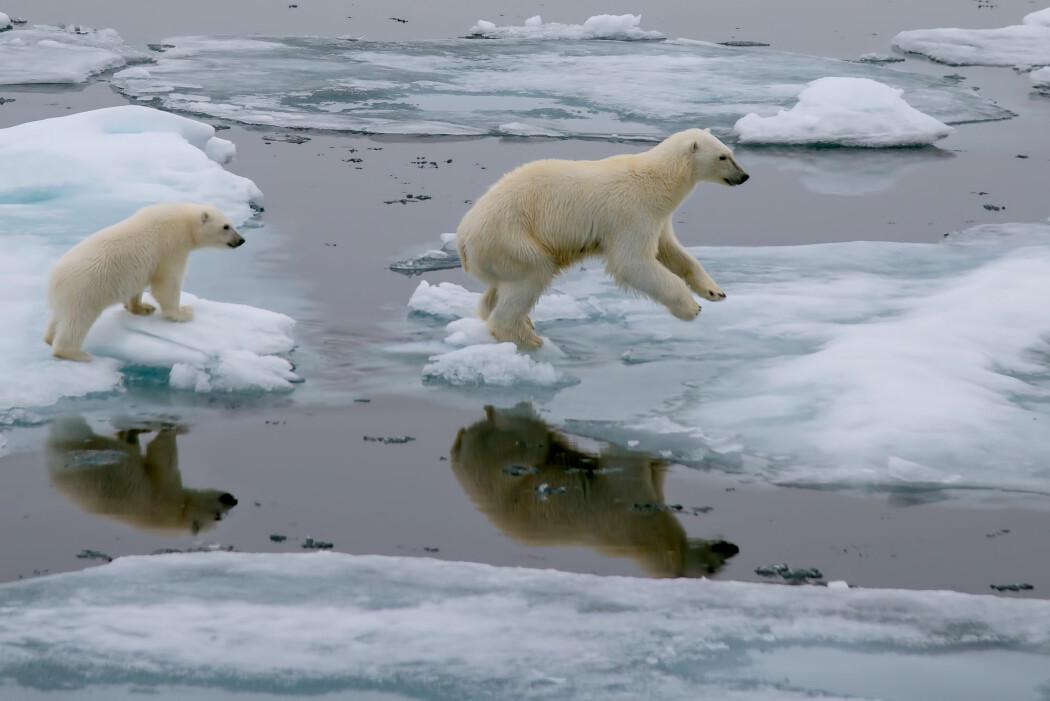 Faktasjekkorganisasjonen Climate Feedback, som jobber utelukkende med faktasjekk av klimapåstander, har fått seks eksperter til å gjennomgå oppropet. De har konkludert med at den overordnede vitenskapelige troverdigheten er «veldig lav». (Illustrasjonsfoto: FloridaStock, Shutterstock, NTB scanpix)