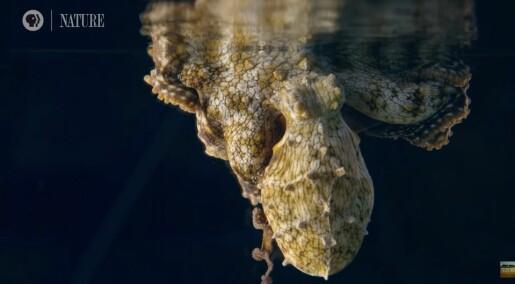 Drømmer virkelig denne blekkspruten?