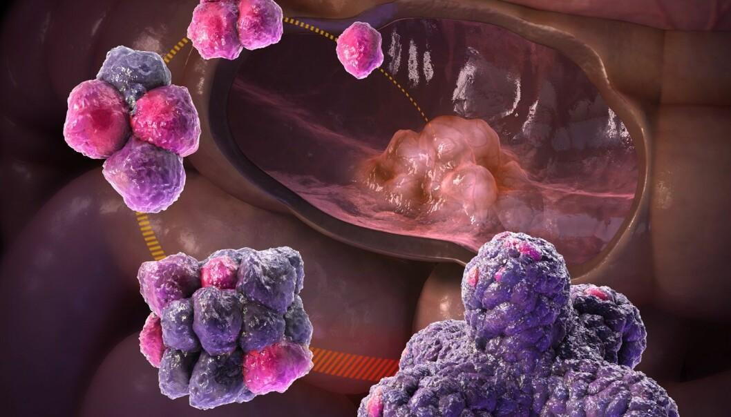 Kunstnerens syn på prosessen med å dyrke organoider fra stamceller fra voksne mennesker. (Illustrasjon: Courtesy Hans Clevers)