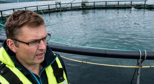 Lukkede merdsystem i sjø beskytter laksen mot lakselus