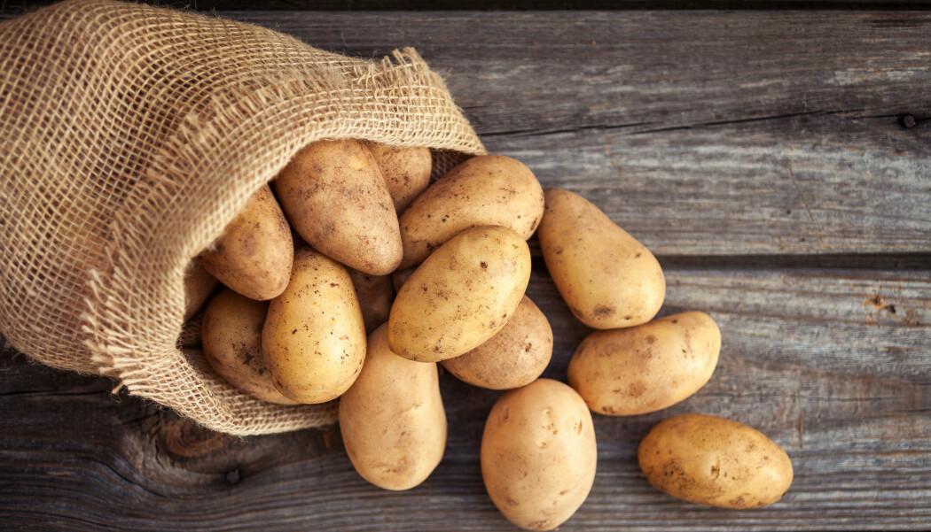 Forskere har undersøkt hvilken effekt poteter har på prestasjonen til topptrente syklister.