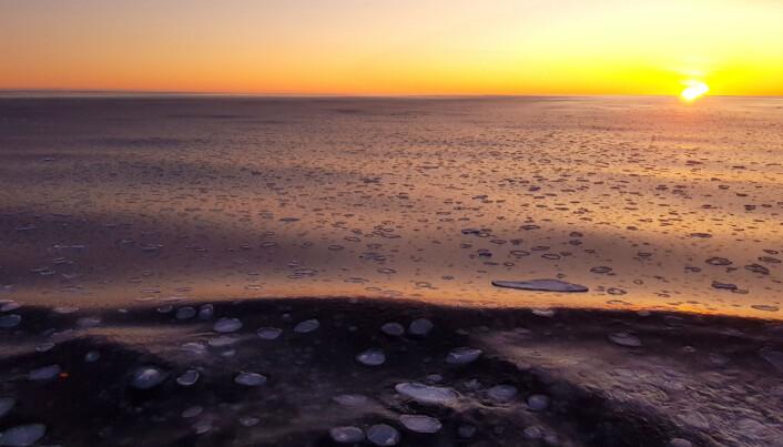 Pannekakeis i vakkert arktisk lys. (Foto: Lilja R. Bjarnadóttir)