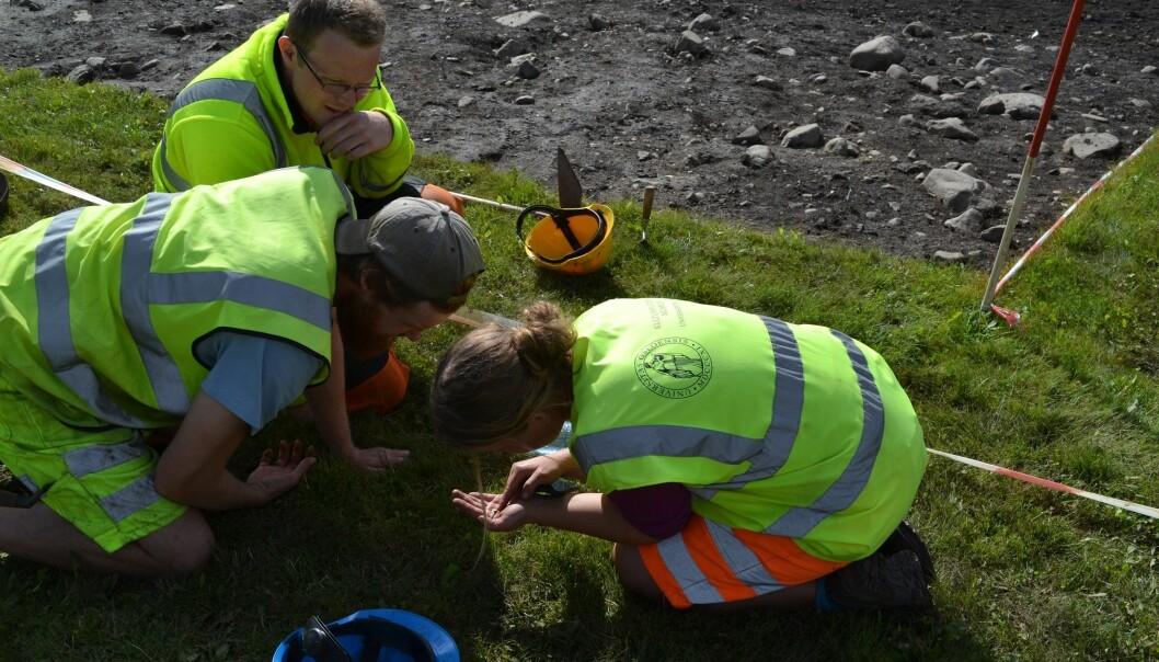 Her kikker arkeologene på en liten gullgubbe på Åker i Hamar, i 2016. (Foto: Tone Bergland, Kulturhistorisk museum, uio)