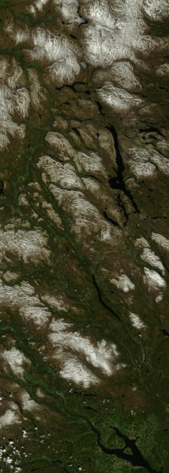 Et langt satellittpass med mye fin natur fra Tydal til Hamar 29. mai. (Foto: (NASA Terra MODIS))
