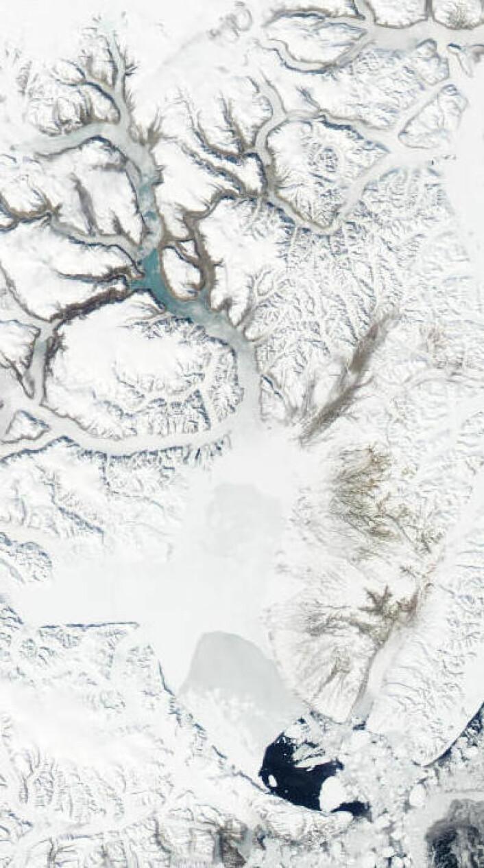 Det er vår og snart sommer i Scoresby Sund på Grønland. Her sett i 2x redusert oppløsning fra NASAs satellitt Aqua 6. juni. (Foto: (NASA Aqua MODIS))