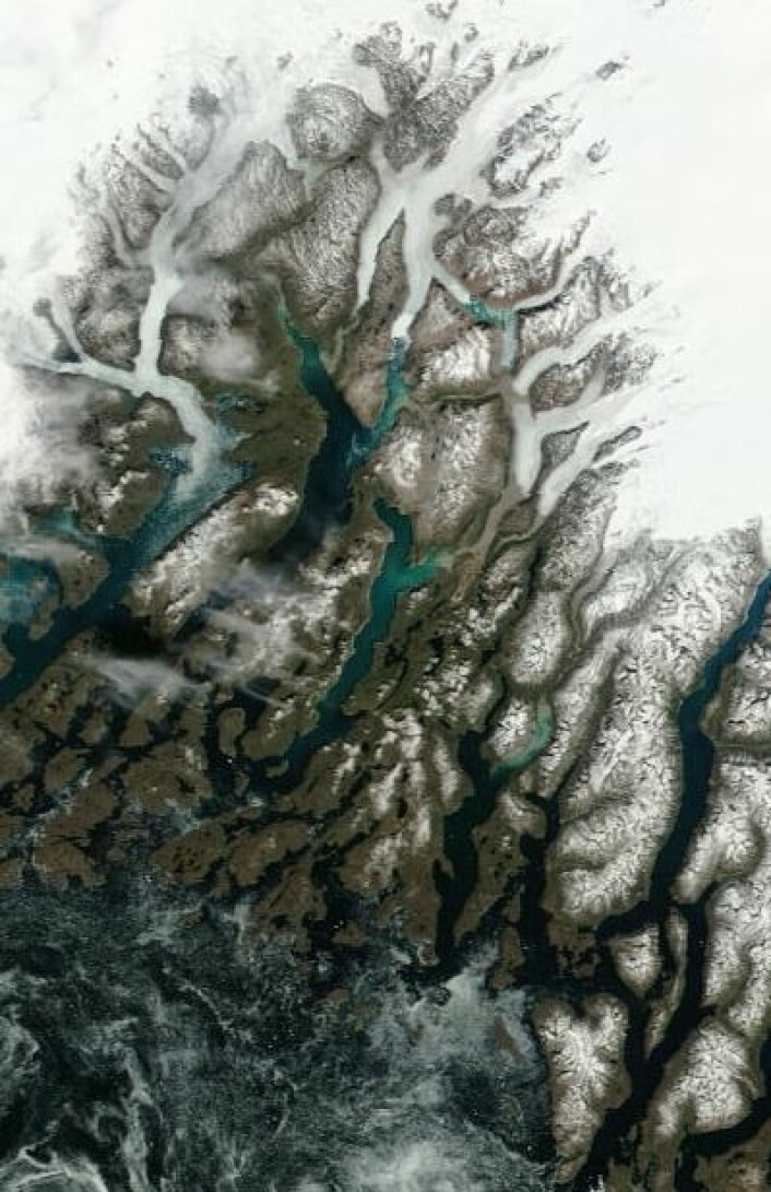 19. juni var det fortsatt noe sjøis i fjorden utenfor stedet der Eirik Raudes gård Brattahlid en gang lå. (Foto: (NASA Terra MODIS))