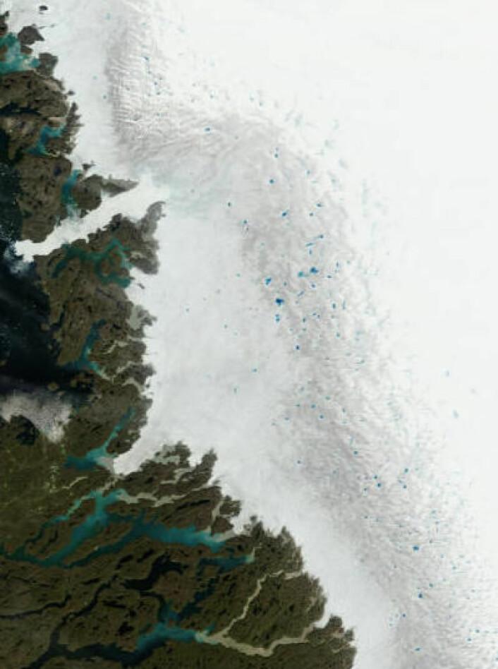 Mye smeltevann oppe på Grønlands store isbre 11. juli. (Oppløsning er redusert 2x for å dekke et større område). (Foto: (NASA Terra MODIS))