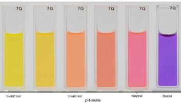 Auronidin viser gule til blå farger når væsken det er løst i svinger fra surt til basisk. (Foto: Proceedings of the National Academy of Sciences, Helge Berland)