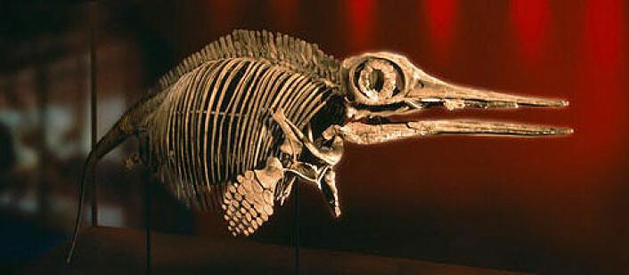 Ophthalmosaurus icenicus. Skjelett montert i 3d Foto: Natural History Museum, UK