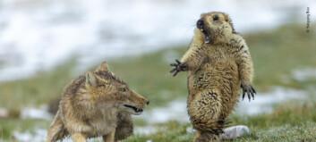 Se de beste bildene av ville dyr