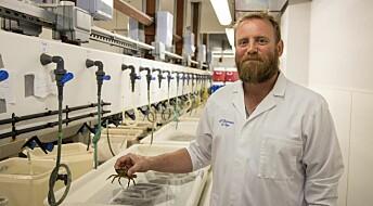 Krabber husker veien i en labyrint, viser ny studie