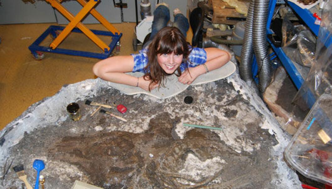 Aubrey Roberts under preparering av skallen av Janusaurus lundi. Synnøve Botnen