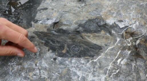 Se blekksprutfossiler og trær som overlevde Hiroshima-bomben