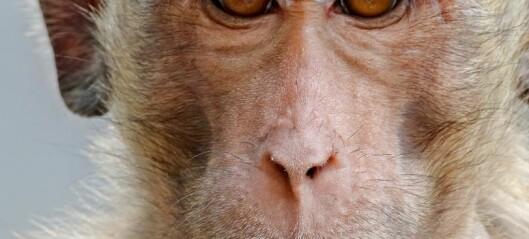 Aper og mennesker opplever musikk forskjellig