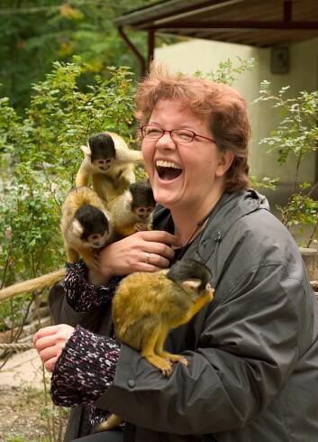 Både aper og mennesker kan le ved mekanisk stimulans. (Foto: Scanpix)