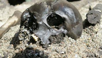 Beinrester fra flere hundre krigere er funnet ved utgravingsstedet. Her er en av hodeskallene som er funnet. Peter Jensen,  Aarhus universitet