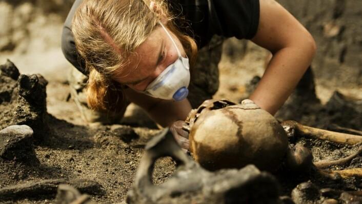 Arkeologistudenten Arjen Heijnis er en av dem som har bidratt i arbeidet. Her graver hun ut en hodeskalle. (Foto: Mads Dalegaard, Medieafdelingen Mosegård)