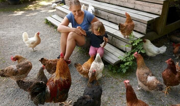 På en bondegård blir barn utsatt for et stort mangfold bakterier og andre mikroorganismer. Det er gunstig for dem. (Foto: Kerstin Mertens/Samfoto)