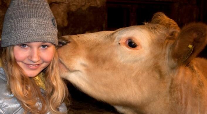 Forskning har tidligere vist at barn som får drikke upasteurisert melk tidlig i livet, får en sterk beskyttelse mot allergi. Men hvor mye bakteriene for melka betyr for beskyttelse mot allergi, er fortsatt et ubesvart spørsmål. (Foto: Colorbox)