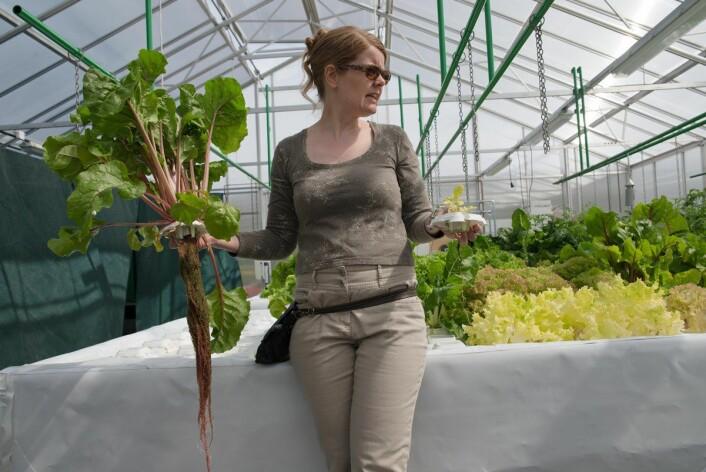 Forsker Randi Seljåsen holder opp to av plantene i akvaponi-anlegget. Nå er det mer planter i karet enn mengde tilgjengelig næring, derfor ser noen av plantene gule ut. (Foto: Anette Tjomsland)