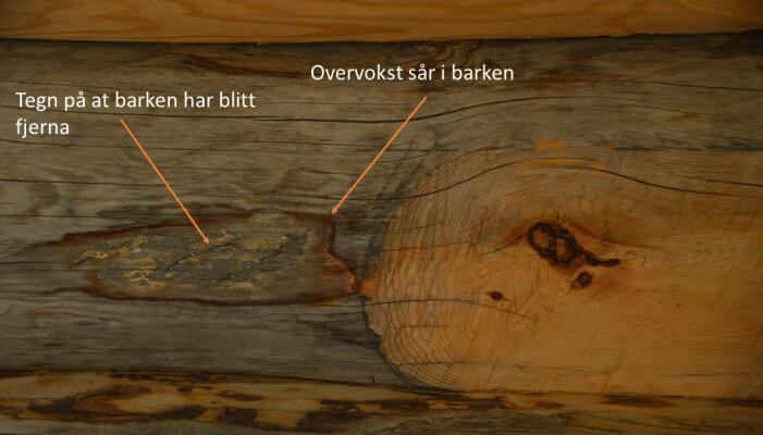 Tømmer med spor etter flekkbarking eller «blæking». Figur: Line Nybakken
