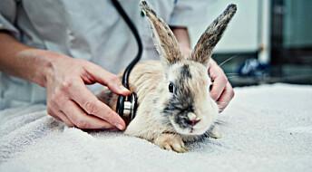 Banebrytende forskning på kjæledyrkaniner