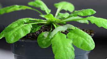 Planter reagerer på lyden av å bli spist