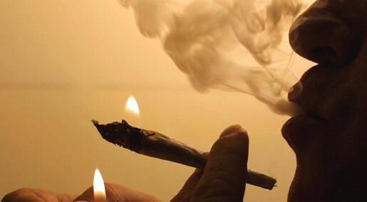 Hjernens «gledesstoff» gir marihuana-misbrukere angst