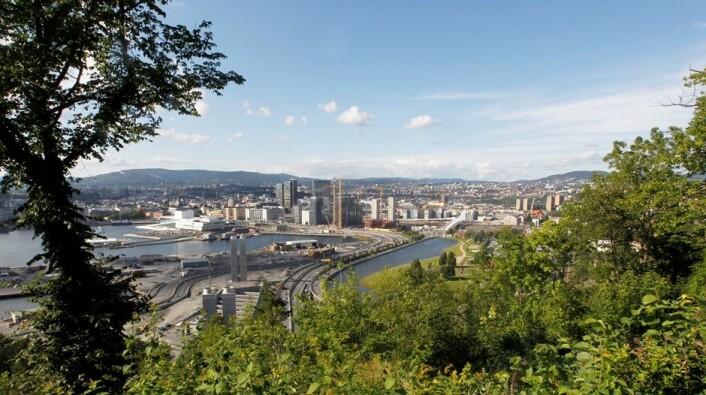 Ekebergskrenten er et av de stedene i Oslo med mest biologisk mangfold. (Foto: Morten Holm / Scanpix)