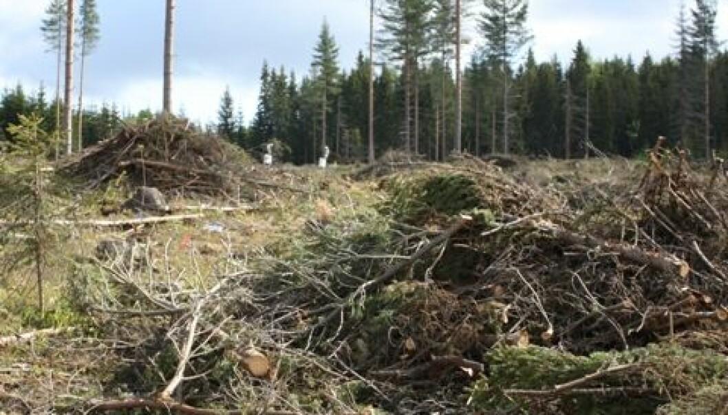 Dersom skogbruket lar grupper av trær bli stående igjen ved flatehogst, øker overlevelsessjansene for mange arter som lever i skogen. Kjersti Holt Hanssen, Skog og landskap
