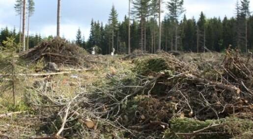 Arter overlever når det står igjen trær