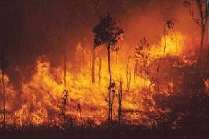 Branner som her i Australia, bidrar til at store mengder sot går opp i atmosfæren. (Foto: Savanna Explorer, Australia)