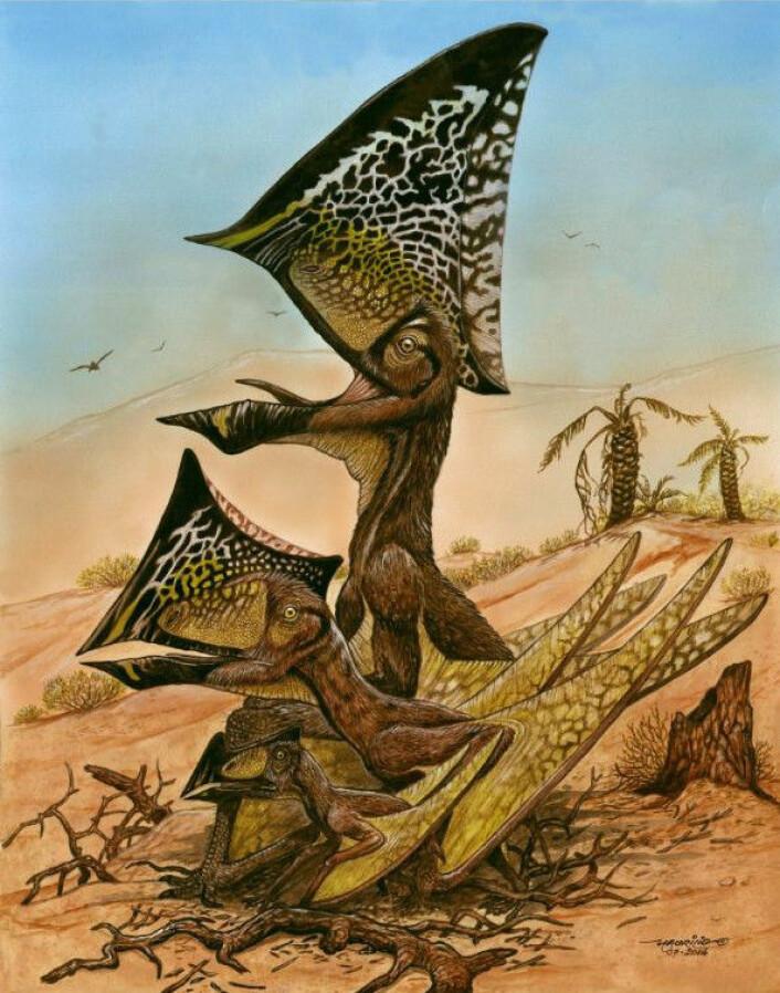 Pterosauren hadde en veldig særegen hodefasong. (Foto: (Bilde: Maurilio Oliveira/Museu Nacional-UFRJ))