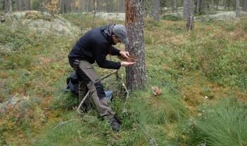 Debatt om BioFokus' kritiske skograpport